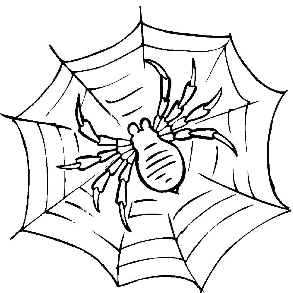 Тарантул на паутине