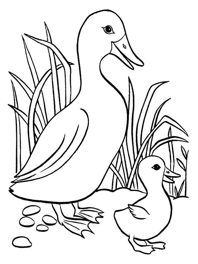 утка и утёнок