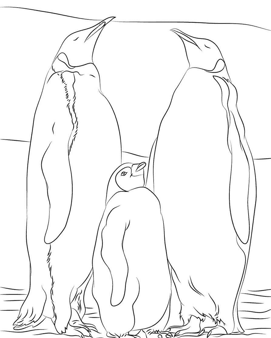 Два императорских пингвина