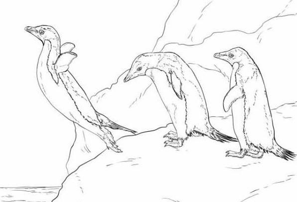 Раскраска пингвины 11