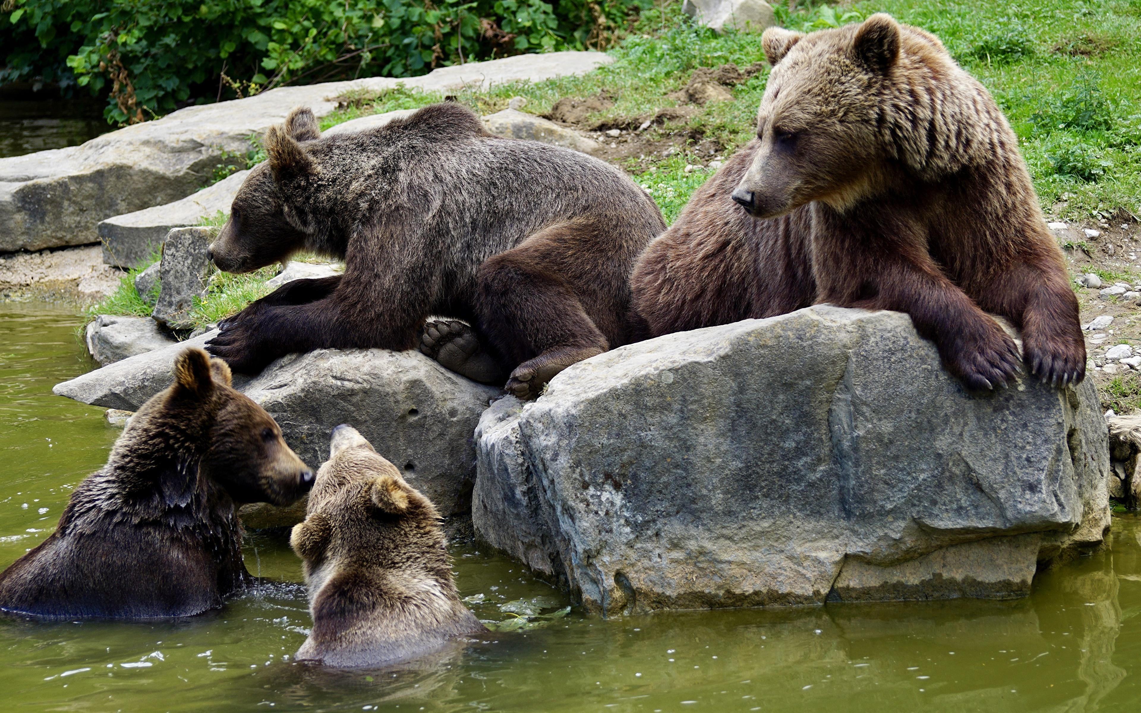 семья медведей 6