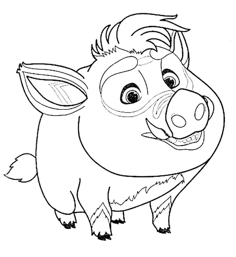 свинка Куба