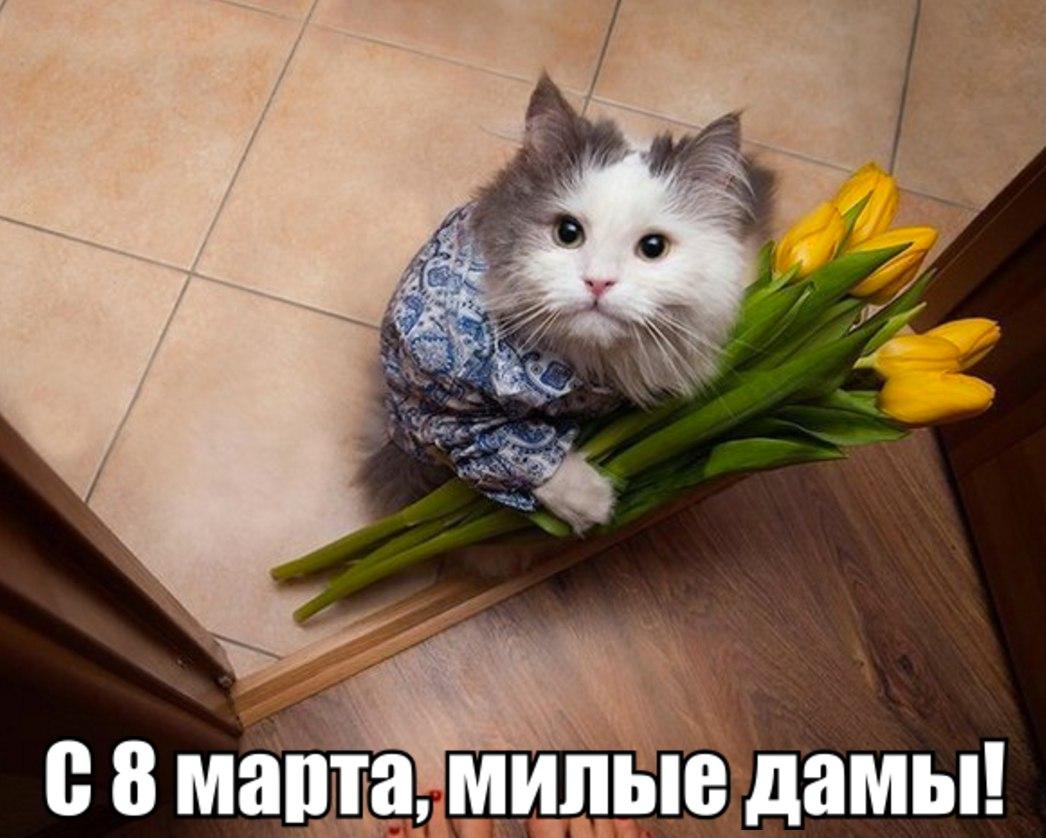 милая кошка фото 6