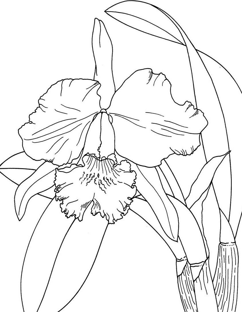 цветок орхидея рисунок 12