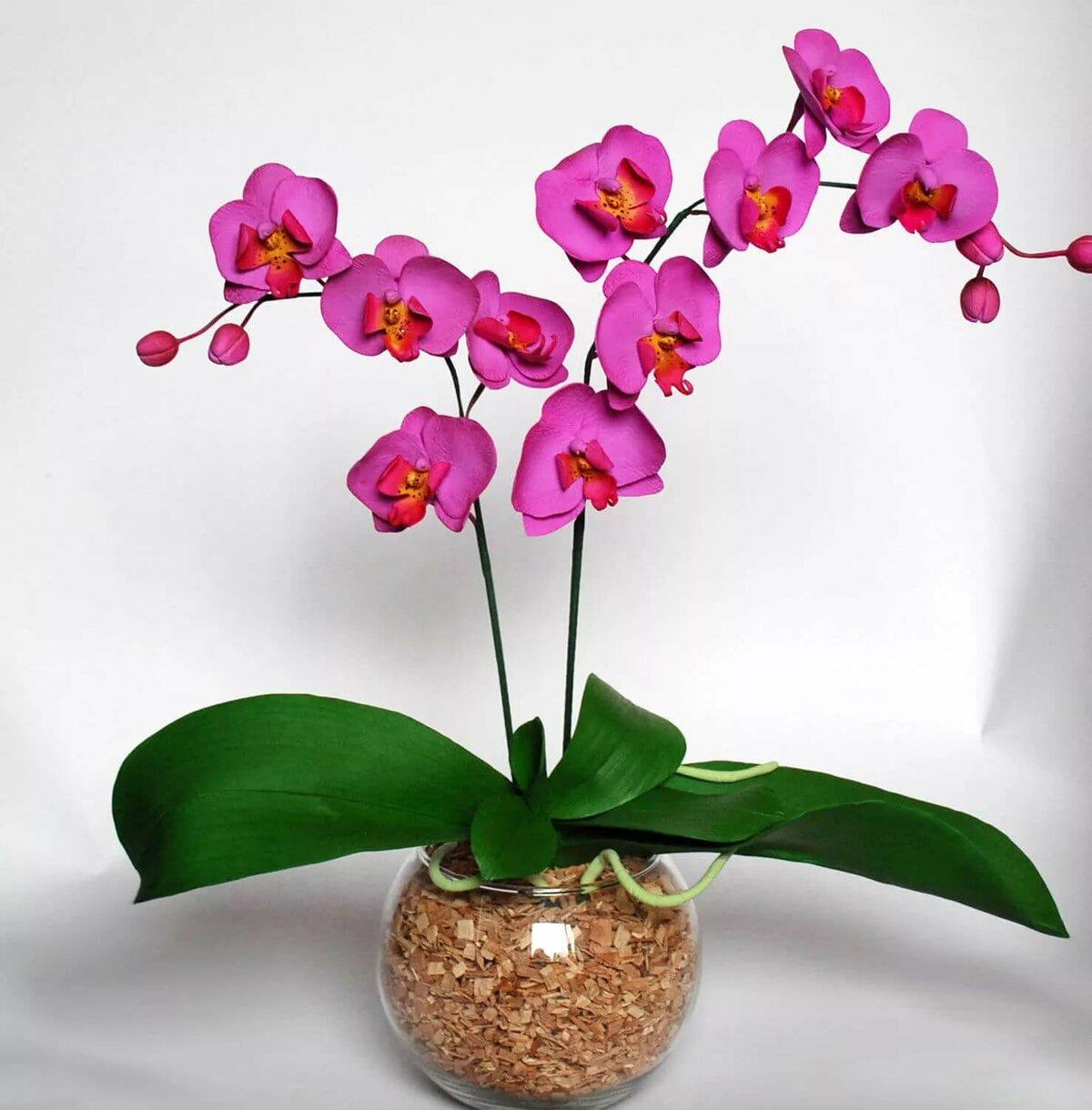 орхидея фото 41