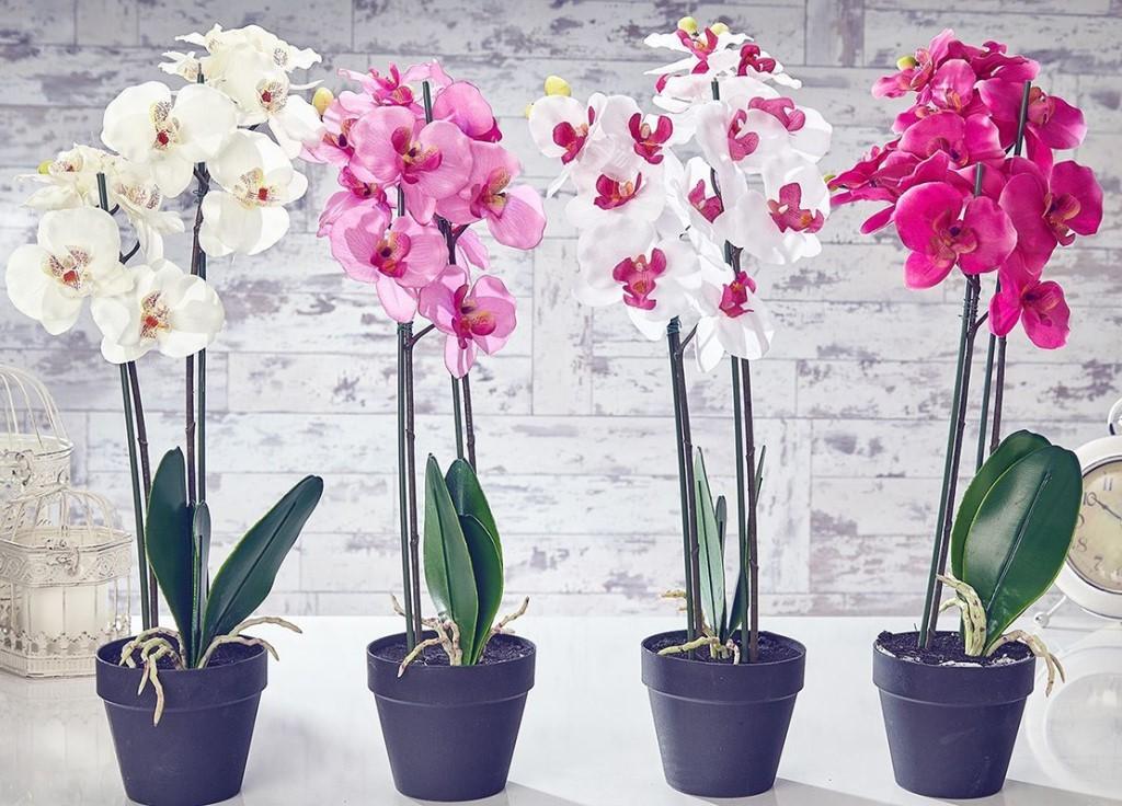 разноцветные орхидеи фото 31