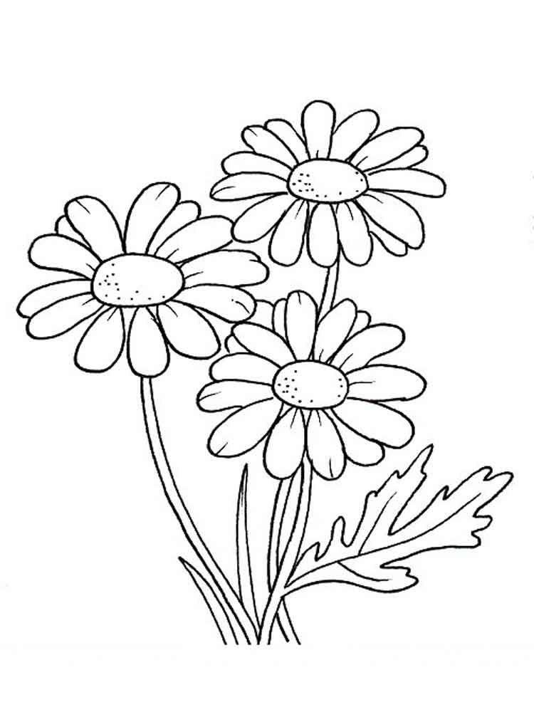 ромашки рисунок 41