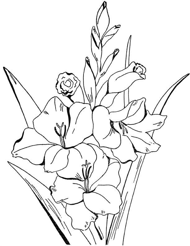 гладиолусы рисунок 40