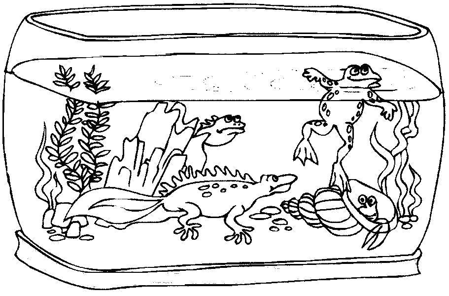 Аквариум с лягушкой