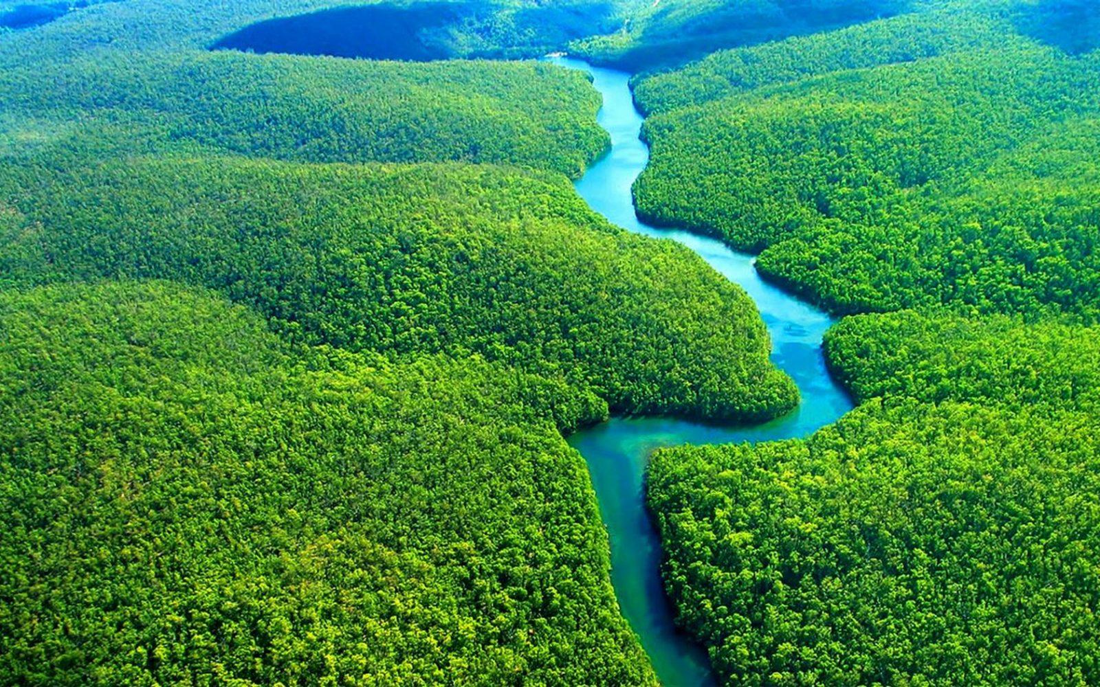 Бразильская амазонка