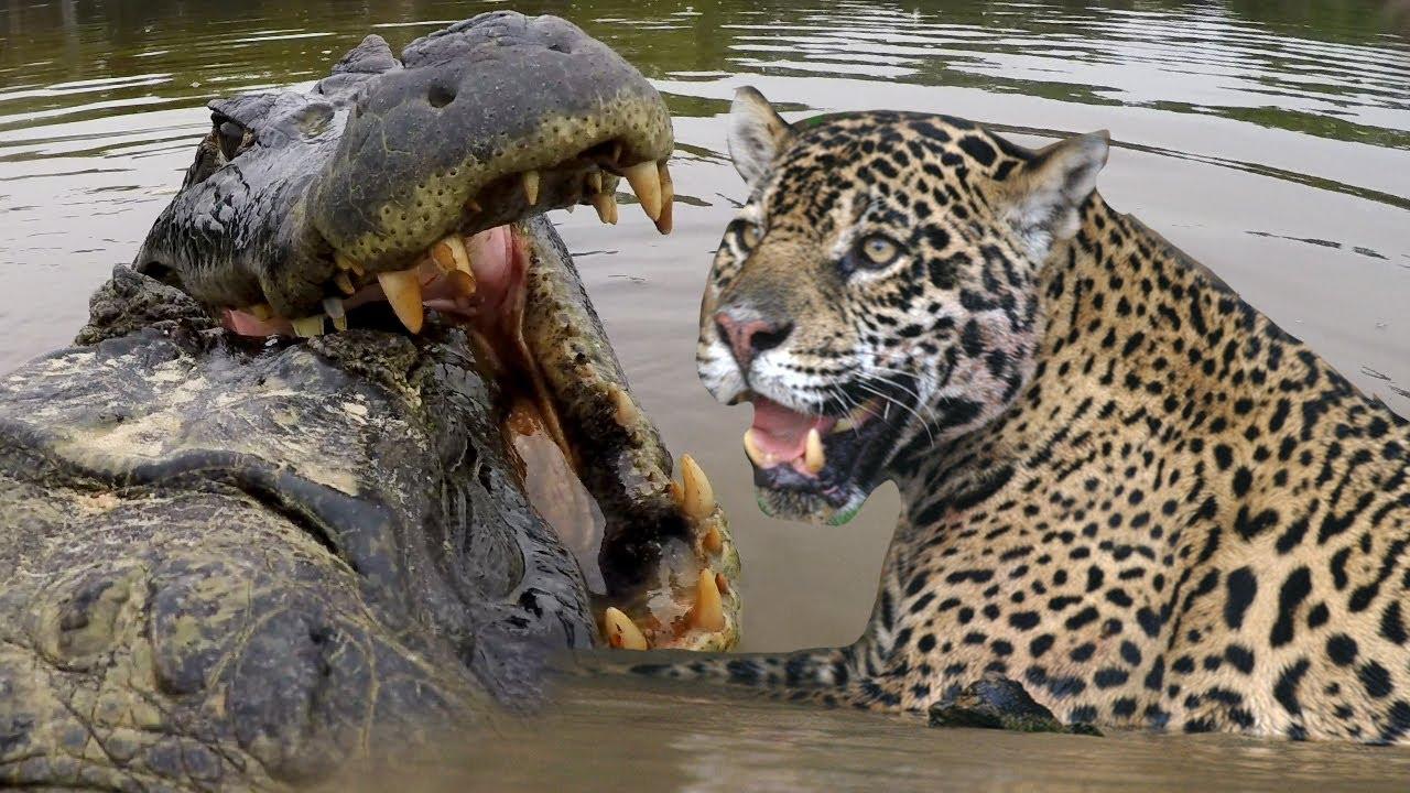 животные Бразилии 27