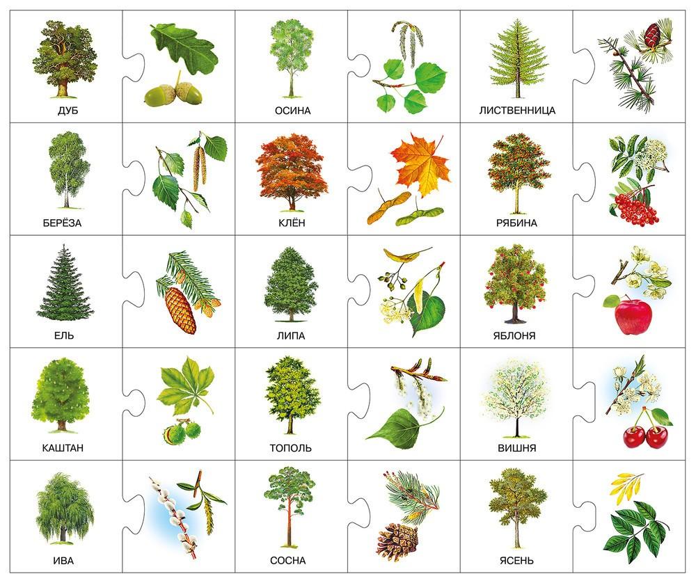 картинки деревьев 41