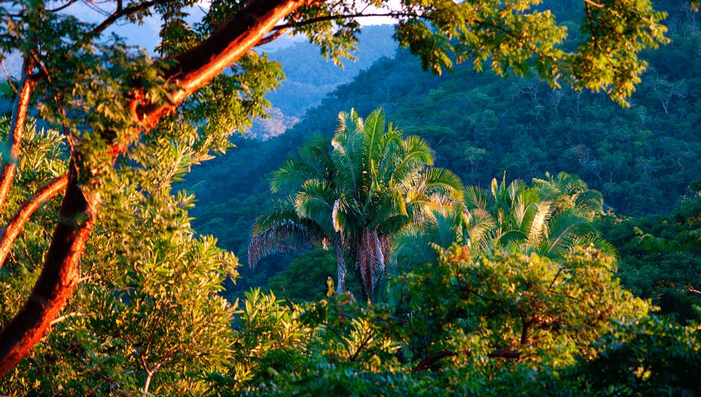 тропический лес 111