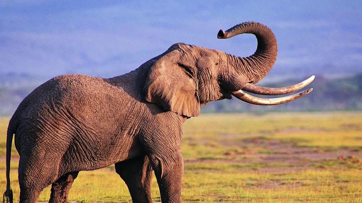 фото слон 200