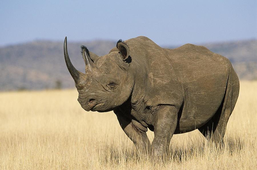 носорог фото 202