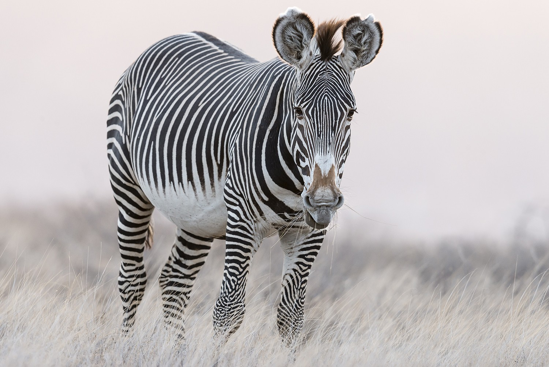 жираф фото 200