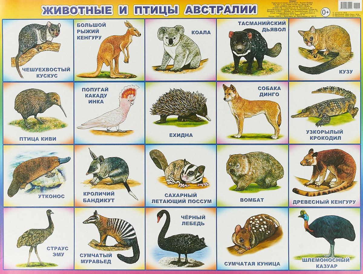 животные Австралии картинки 5