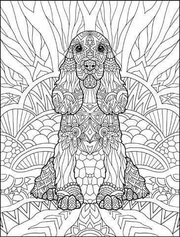 Раскраска спаниель 29