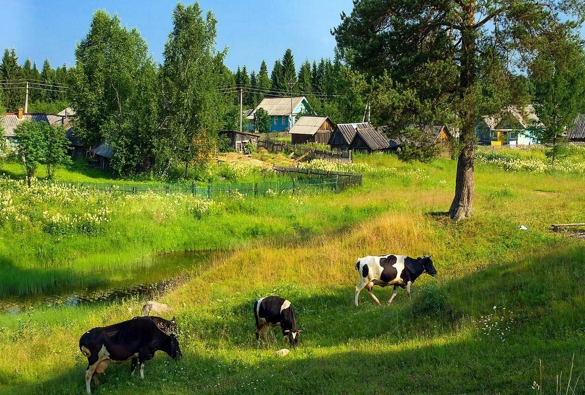 лето в деревне 61
