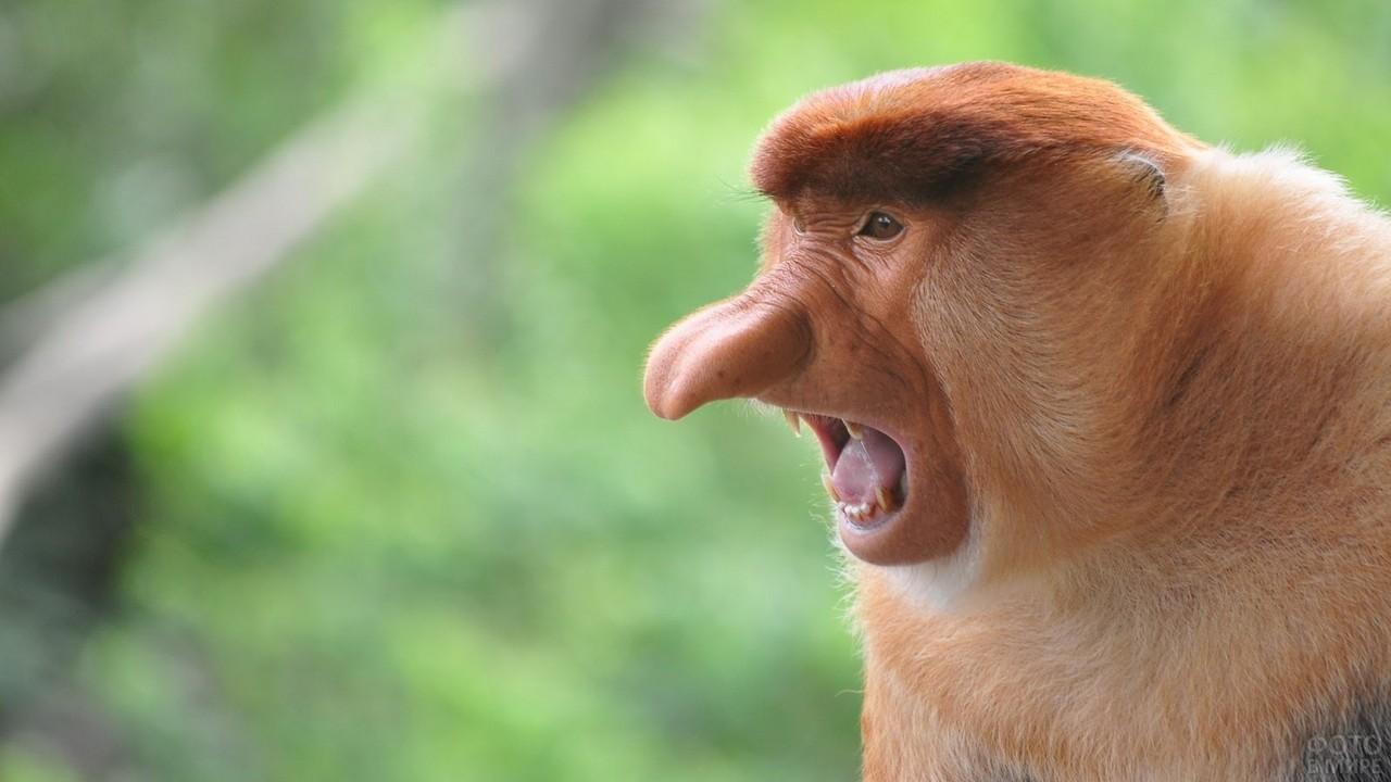 Фото обезьяны 25