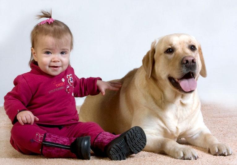 Маленькая девочка с лабрадором
