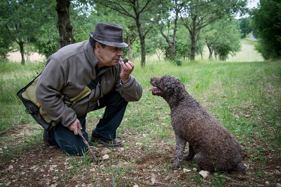 Пудель ищет трюфели