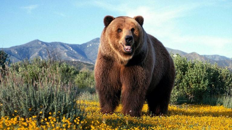 фото медведь 345