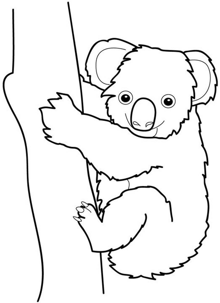 Раскраска коала
