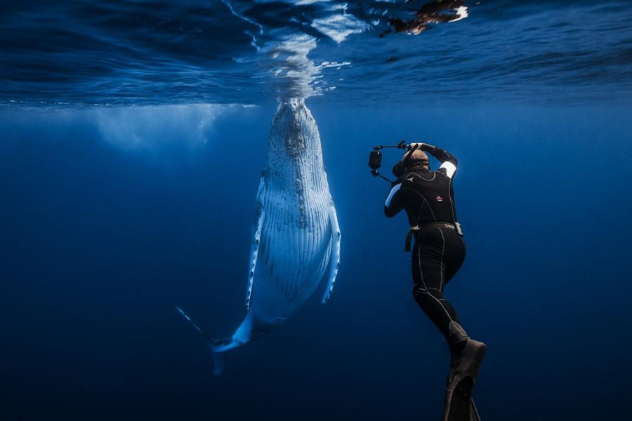 аквалангист и кит