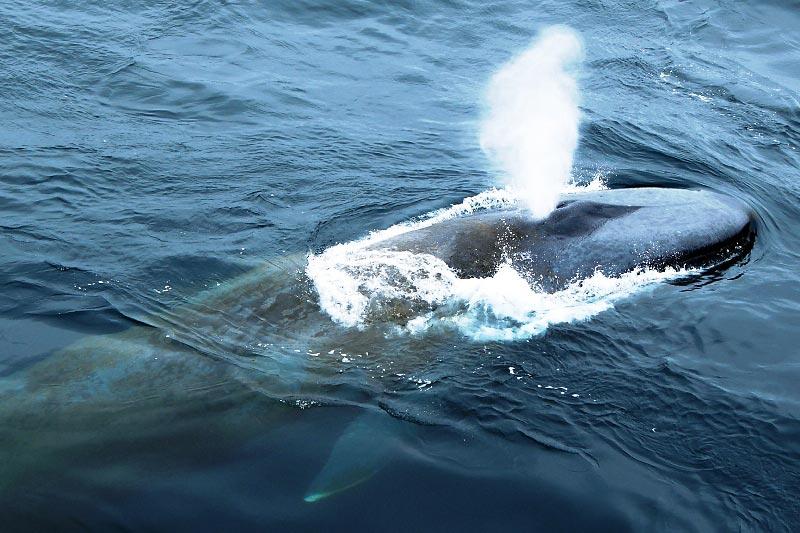 Синий кит 48
