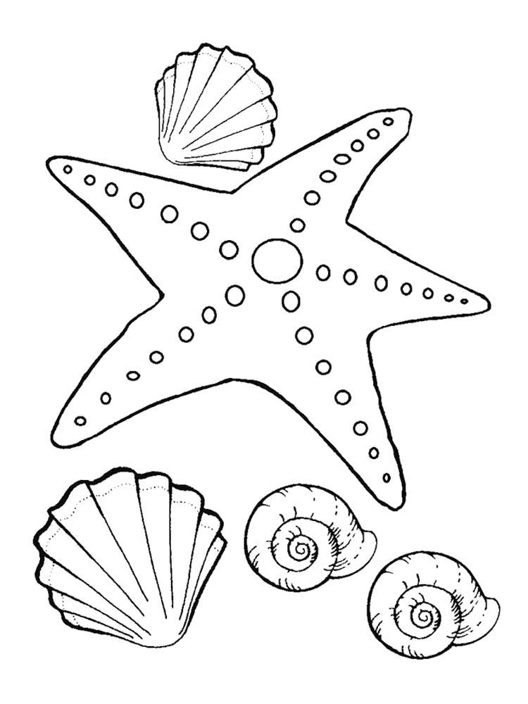 Раскраска морская звезда 51