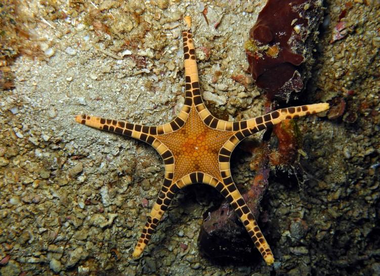 фото морская звезда 34