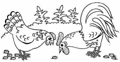 Раскраска петух и курица